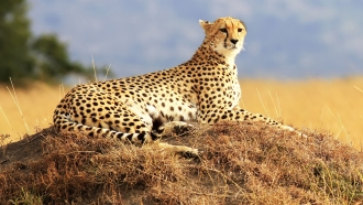 East African Wildlife Safari
