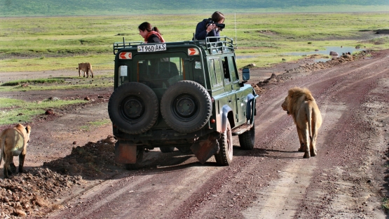 Unique Safari Experience