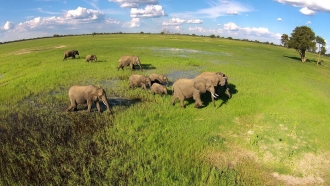 Luxury Zimbabwe Wildlife Safari