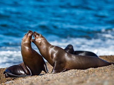 Posadas - Trelew - Puerto Madryn