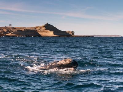 Ushuaia - Puerto Madryn