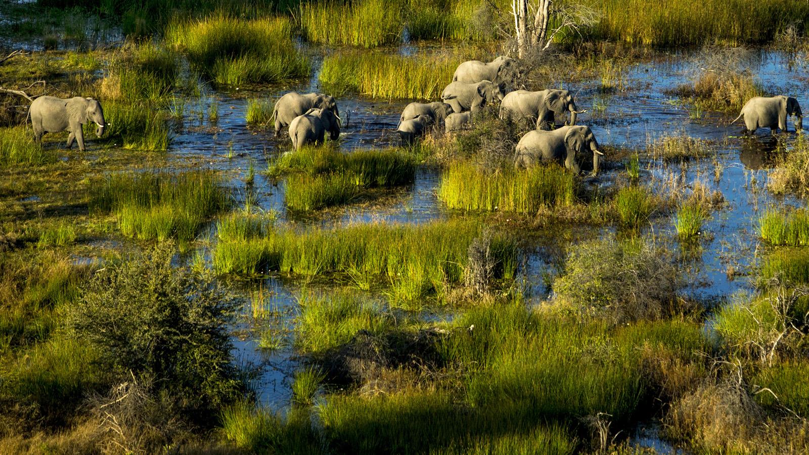Tours to Botswana