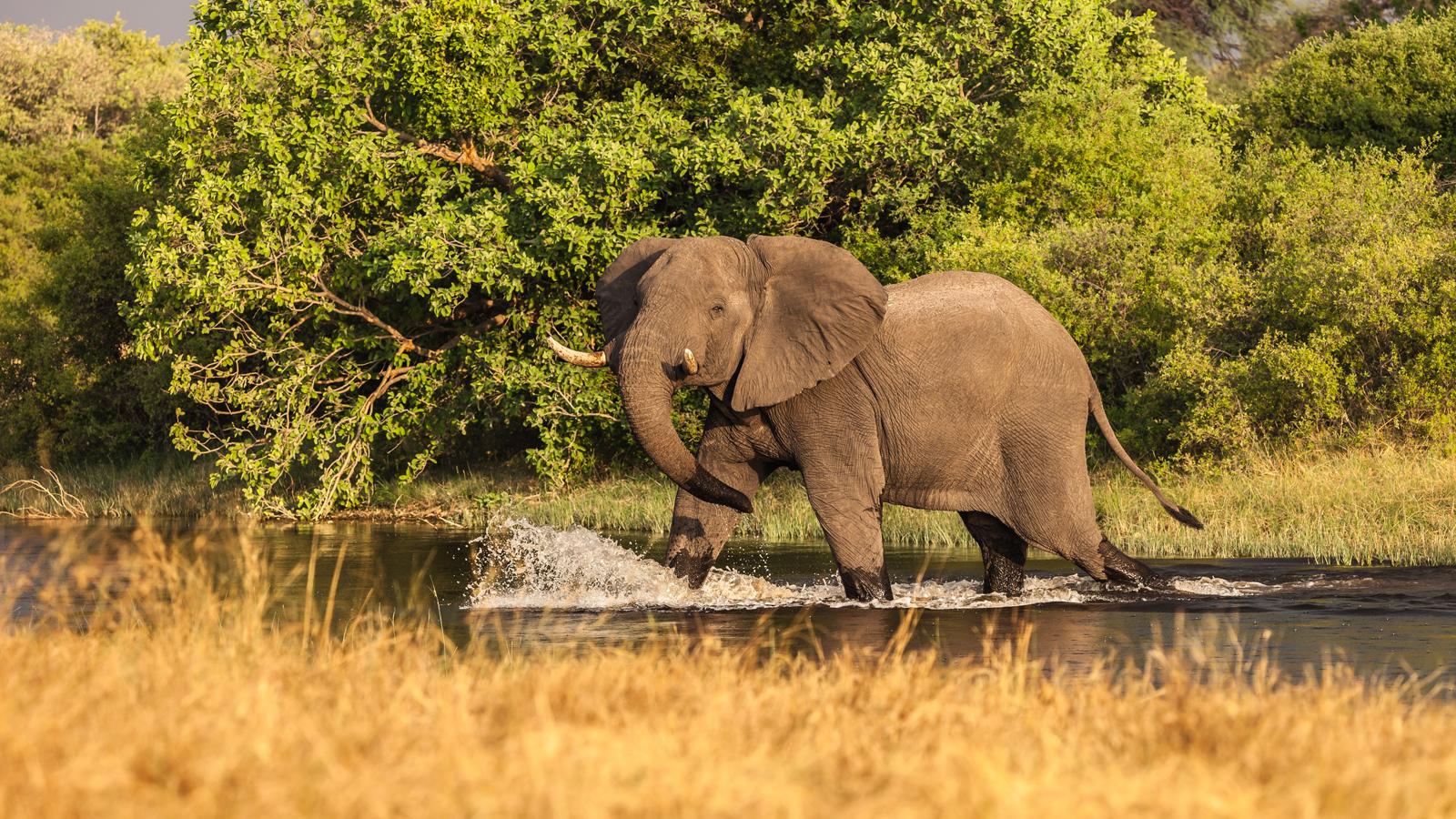 Authentic Lodge & Mobile Safari
