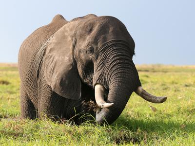Okavango Delta - Moremi Game Reserve