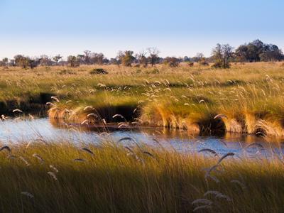 Okavango Delta Arrival