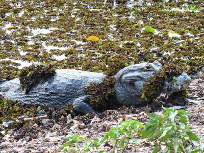 North Pantanal - Cuiabá - Campo Grande - South Pantanal