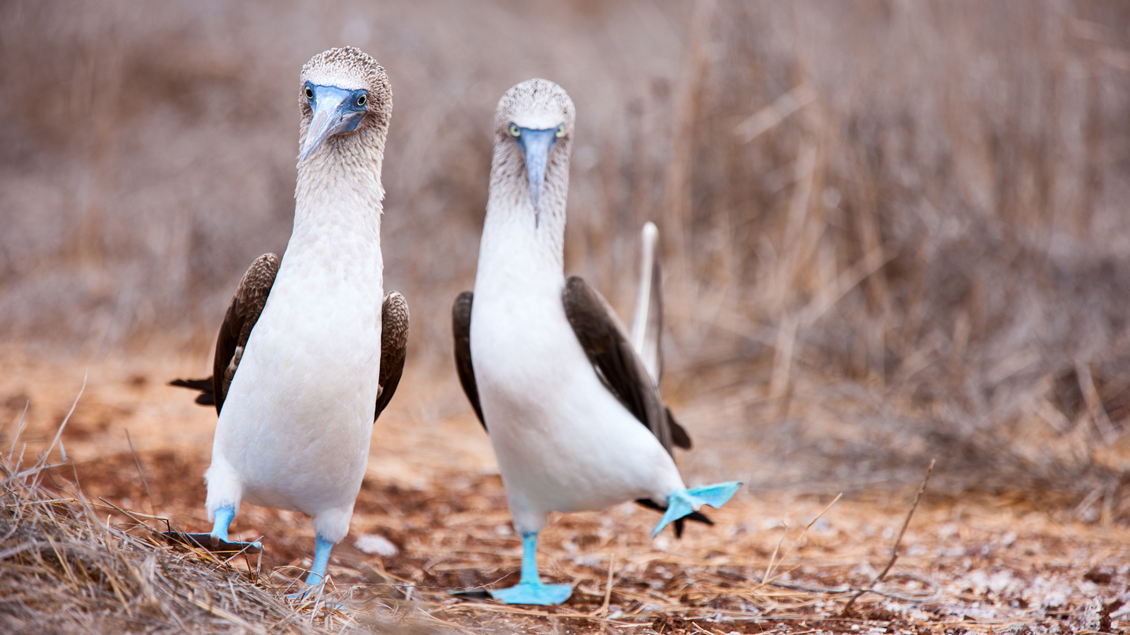 Galapagos Guardians Land Based