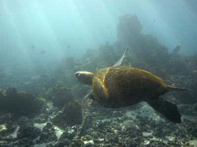 Galapagos Departure