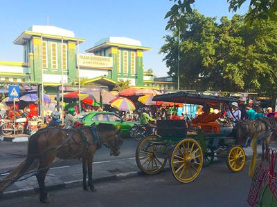 Tanjung Puting - Pangkalanbun - Yogyakarta
