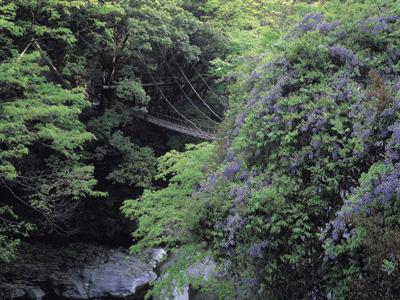 Takamatsu - Iya Valley