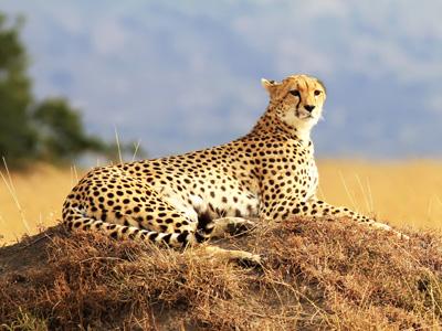 Mara Triangle Reserve