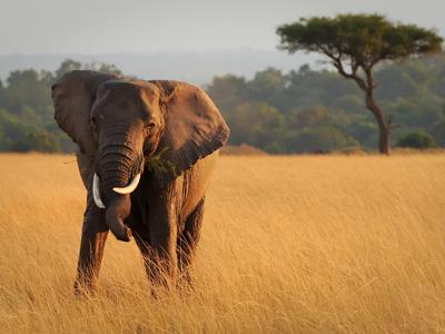 Solio Reserve - Masai Mara