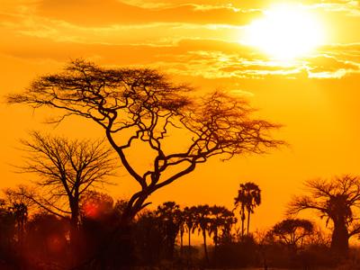 Masai Mara - Nairobi Departure