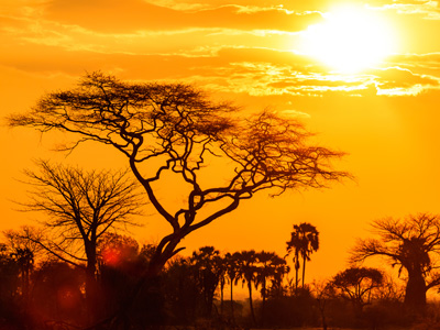 Mara Triangle Reserve - Nairobi Departure