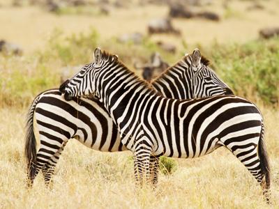 Masai Mara - Mara Triangle Reserve