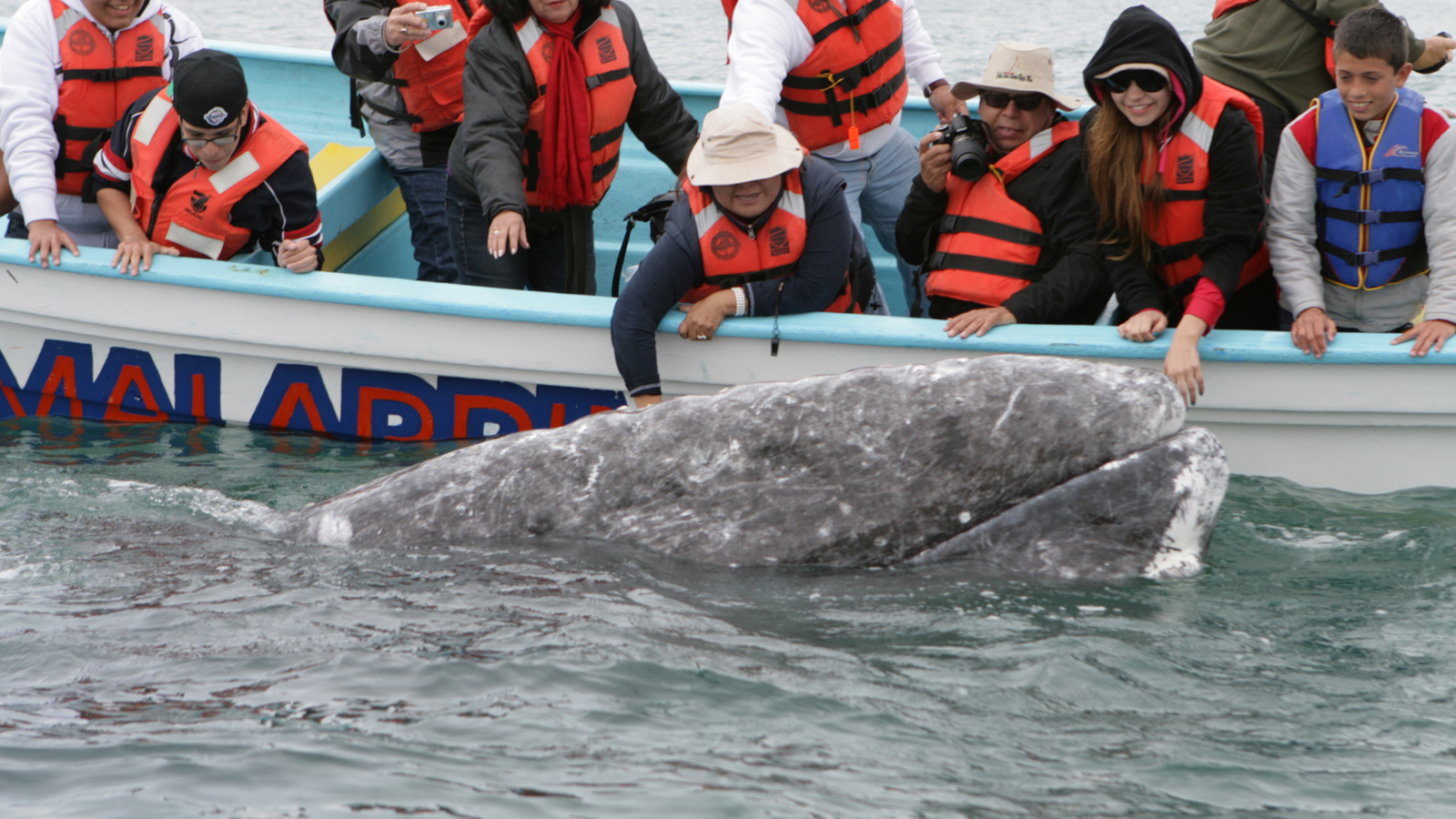 Gray Whales, Sea Turtles & National Parks of Baja California Sur