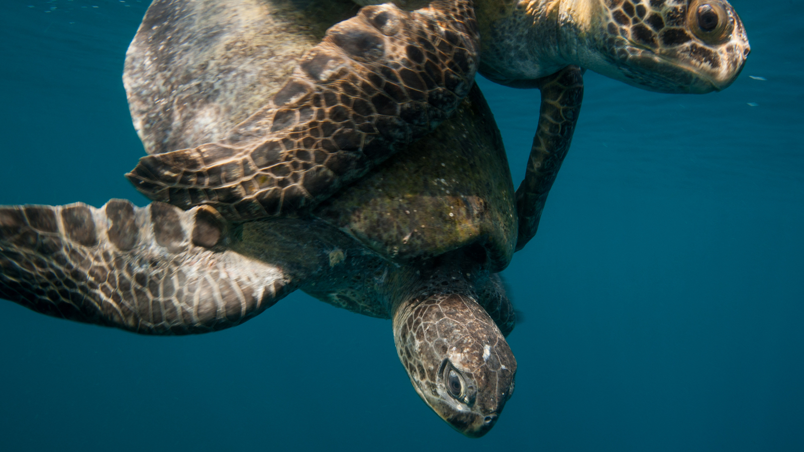Gray Whale & Sea Turtle Adventure: Beach Camping On Magdalena Bay