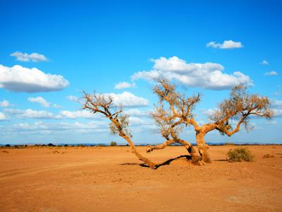 Efroud - Merzouga - Sahara Desert
