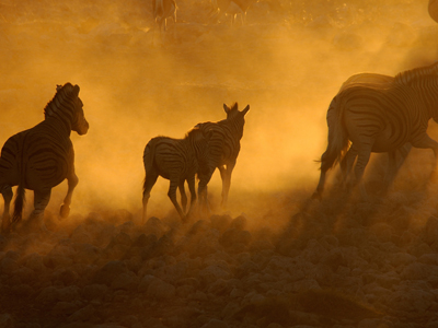 Kunene Region - Etosha National Park