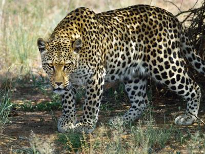 Etosha National Park - Windhoek Departure