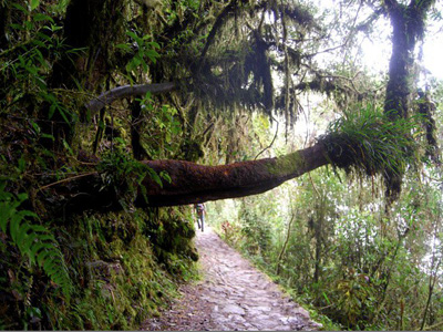 Sacred Valley - Machu Picchu
