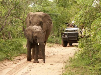 Franschhoek - Kruger National Park
