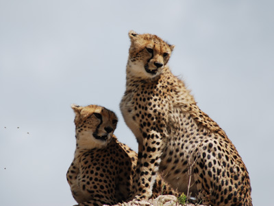 Northern Serengeti