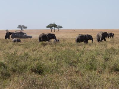 Ngorongoro - Ndutu