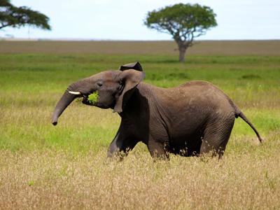 Serengeti - Crater Highlands