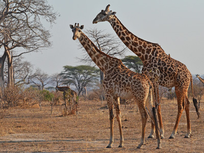 Selous Game Reserve - Dar es Salaam - Swahili Coast