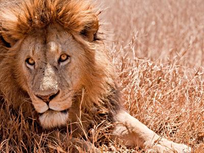 Serengeti - Tarangire