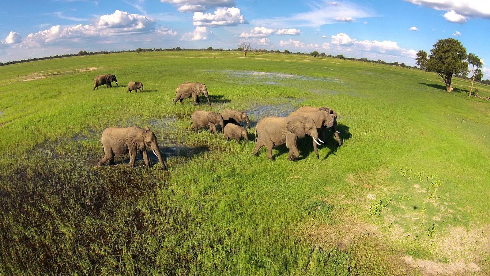Luxury Zimbabwe Wildlife Safari